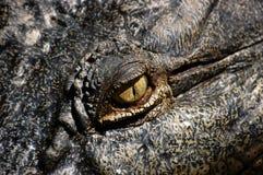 Fermez-vous vers le haut de la vue de l'oeil d'un crocodile. Photo libre de droits