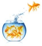 Fermez-vous vers le haut de la vue de la cuvette de poissons d'isolement Photos libres de droits