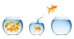 Fermez-vous vers le haut de la vue de la cuvette de poissons d'isolement Images libres de droits