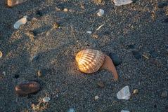 Fermez-vous vers le haut de la vue de la plage le soir avec de diverses coquilles, pierres, sable et longues ombres Photos stock