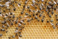 Fermez-vous vers le haut de la vue des abeilles de travail Photos stock