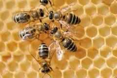 Fermez-vous vers le haut de la vue des abeilles de travail Image libre de droits