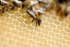 Fermez-vous vers le haut de la vue des abeilles de travail Photographie stock libre de droits