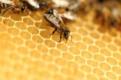 Fermez-vous vers le haut de la vue des abeilles de travail Image stock