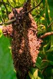 Fermez-vous vers le haut de la vue des bes fonctionnants sur des cellules de miel image stock