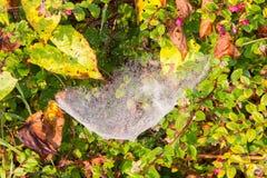 Fermez-vous vers le haut de la vue des ficelles d'une toile d'araignées Photos stock