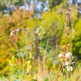 Fermez-vous vers le haut de la vue des ficelles d'une toile d'araignées Image libre de droits