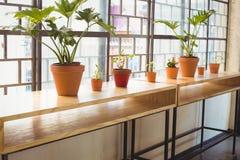 Fermez-vous vers le haut de la vue des pots de fleurs dans une ligne Image stock
