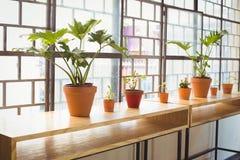 Fermez-vous vers le haut de la vue des pots de fleurs dans une ligne Photos libres de droits