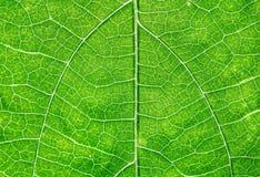 Fermez-vous vers le haut de la vue de la feuille verte Images stock
