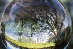 Fermez-vous vers le haut de la vue sur de beaux arbres de paysage dans le ciel bleu et le pré vert par la sphère de boule de lent Photos libres de droits