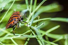 Fermez-vous vers le haut de la vue sur l'insecte de Minstreal Images libres de droits