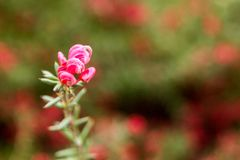 Fermez-vous vers le haut de nouvelles pousses de fleur photographie stock