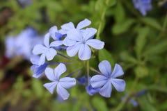 fermez-vous vers le haut de petites fleurs Images stock