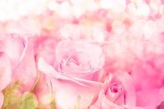 fermez-vous vers le haut de rose-clair doux sur le fond abstrait rose d'éclairage Image stock