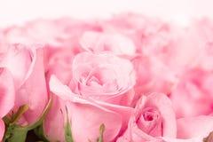 fermez-vous vers le haut de rose-clair doux sur le fond abstrait rose d'éclairage Images libres de droits