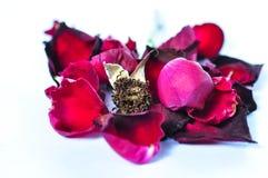 Fermez-vous vers le haut de Rose rouge Photographie stock