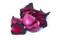 Fermez-vous vers le haut de Rose rouge Photo stock