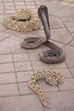 Fermez-vous vers le haut de trois serpents Images stock