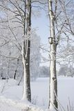 Fermez-vous vers le haut des arbres congelés avec un nid d'oiseau photo libre de droits