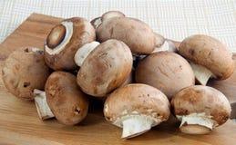 Fermez-vous vers le haut des champignons de couche photos stock