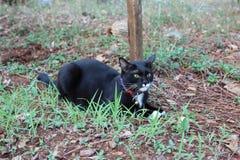 Fermez-vous vers le haut des chatons noirs étroits et mignons se reposent dans le jardin image stock