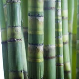 Fermez-vous vers le haut des cheminées en bambou photo libre de droits