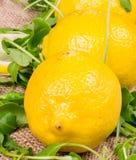 Fermez-vous vers le haut des citrons détaillés avec de la salade Images stock