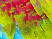 Fermez-vous vers le haut des clavettes colorées Image stock