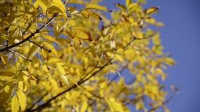 Fermez-vous vers le haut des feuilles d'automne au-dessus de fond de ciel bleu Photographie stock libre de droits