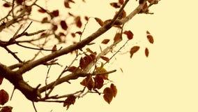 Fermez-vous vers le haut des feuilles d'automne au-dessus de fond de ciel bleu Images libres de droits