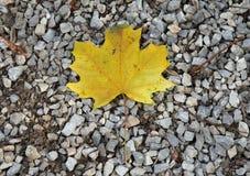 Fermez-vous vers le haut des feuilles d'automne sur le fond de gravier au jardin botanique Photographie stock