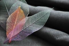 Fermez-vous vers le haut des feuilles squelettiques de couleur Photo stock
