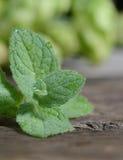 Fermez-vous vers le haut des feuilles vertes fraîches de menthe poivrée Herbes en bon état sur la table en bois de vintage Image stock