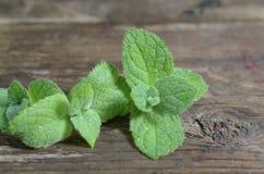 Fermez-vous vers le haut des feuilles vertes fraîches de menthe poivrée Herbes en bon état sur la table en bois de vintage Photographie stock libre de droits