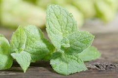 Fermez-vous vers le haut des feuilles vertes fraîches de menthe poivrée Herbes en bon état sur la table en bois de vintage Photos libres de droits
