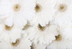 Fermez-vous vers le haut des fleurs blanches photo stock