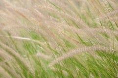 Fermez-vous vers le haut des fleurs d'herbe Photographie stock