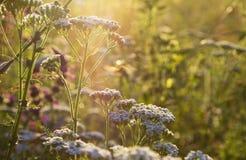 Fermez-vous vers le haut des fleurs dans la lumière du soleil de matin photographie stock libre de droits