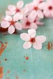 Fermez-vous vers le haut des fleurs de cerise Photos libres de droits