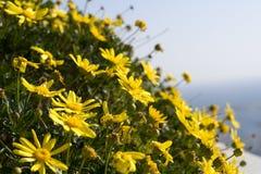 Fermez-vous vers le haut des fleurs jaunes Photos libres de droits