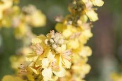 Fermez-vous vers le haut des fleurs jaunes Photo libre de droits