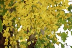 Fermez-vous vers le haut des fleurs jaunes images libres de droits