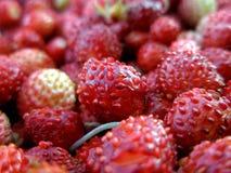 Fermez-vous vers le haut des fraises Photos libres de droits