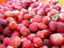 Fermez-vous vers le haut des fraises images stock