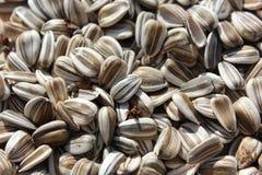 Fermez-vous vers le haut des graines de tournesol Image stock