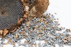 Fermez-vous vers le haut des graines de tournesol moissonnées photos libres de droits