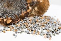 Fermez-vous vers le haut des graines de tournesol moissonnées photo libre de droits