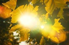 Fermez-vous vers le haut des lames d'automne texture et des rayons du soleil Images libres de droits