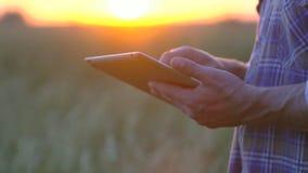 Fermez-vous vers le haut des mains de producteurs avec le comprimé dans un domaine de blé Concept agricole moderne, technologie d banque de vidéos